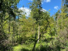 Northern Perry Co. Land Auction * 80 Acres sells Absolute featured photo 8
