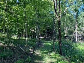 Northern Perry Co. Land Auction * 80 Acres sells Absolute featured photo 9