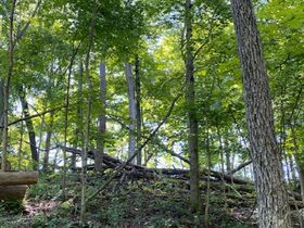 Northern Perry Co. Land Auction * 80 Acres sells Absolute featured photo 10