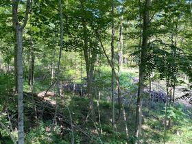 Northern Perry Co. Land Auction * 80 Acres sells Absolute featured photo 12