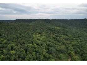 Selling Absolute! 160+/- Acres - Woods and Rolling Hills - ONLINE ONLY AUCTION ends Oct. 12th featured photo 2