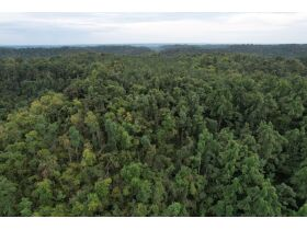 Selling Absolute! 160+/- Acres - Woods and Rolling Hills - ONLINE ONLY AUCTION ends Oct. 12th featured photo 4