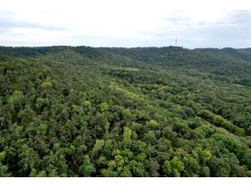 Selling Absolute! 160+/- Acres - Woods and Rolling Hills - ONLINE ONLY AUCTION ends Oct. 12th featured photo 7