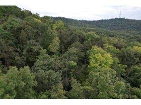 Selling Absolute! 160+/- Acres - Woods and Rolling Hills - ONLINE ONLY AUCTION ends Oct. 12th featured photo 8