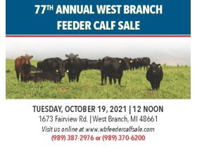 77th Annual West Branch Feeder Calf Sale featured photo 1