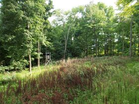 Trophy Whitetail Property that is Set Up and Ready To Go. featured photo 4