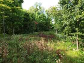 Trophy Whitetail Property that is Set Up and Ready To Go. featured photo 5