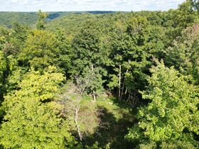Trophy Whitetail Property that is Set Up and Ready To Go. featured photo 12