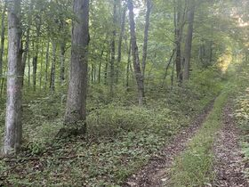 106 Acres Harrison County Land featured photo 3