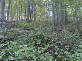 106 Acres Harrison County Land featured photo 7