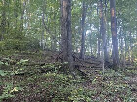 106 Acres Harrison County Land featured photo 9