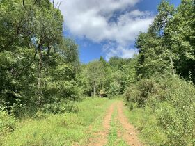 91 Acre Harrison County Land featured photo 1