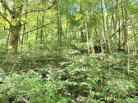 91 Acre Harrison County Land featured photo 4