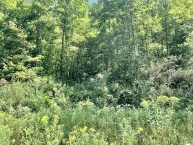 91 Acre Harrison County Land featured photo 6
