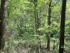 91 Acre Harrison County Land featured photo 7