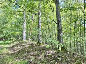 Gilmer County Home, Outbuilding, 219 Acres featured photo 12