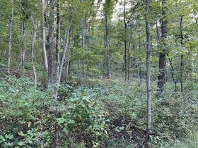 Coshocton County Trophy Hunting Property (Walhonding Area) featured photo 3