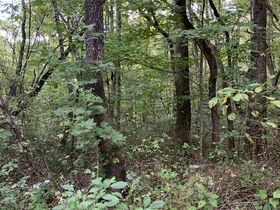 Coshocton County Trophy Hunting Property (Walhonding Area) featured photo 7