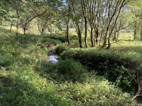 Coshocton County Trophy Hunting Property (Walhonding Area) featured photo 11