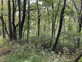 Coshocton County Trophy Hunting Property (Walhonding Area) featured photo 12